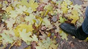 Les jambes de la femme donne un coup de pied le tas des feuilles automnales banque de vidéos