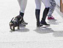 Les jambes de teckel et de cavaliers à la nourriture calent pendant un événement de concurrence de cheval Photo libre de droits