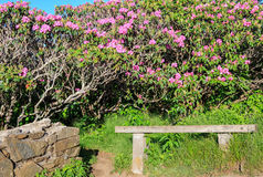 Les jardins rocailleux donnent sur la Caroline du Nord photo libre de droits