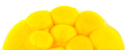 Les jaunes d'oeuf se ferment vers le haut de la vue II Image stock