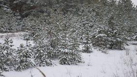 Les jeunes arbres en nature de neige aménagent la belle forêt en parc d'hiver de neige de fond d'arbre de Noël Photos stock