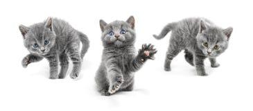 Les jeunes chats sont dans des positions de défense et préparent à l'attac Images libres de droits