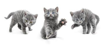 Les jeunes chats sont dans des positions de défense et préparent à l'attac Photo stock