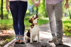 Les jeunes couples marchant avec le chien de briquet pendant l'été se garent Photos stock