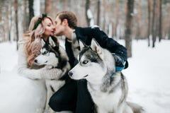 Les jeunes mariés brouillés embrassent sur le fond du chien de traîneau syberian marié de mariée wedding à l'extérieur l'hiver de Image libre de droits