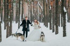 Les jeunes mariés marchent dans la forêt neigeuse avec le chien de traîneau deux sibérien marié de mariée wedding à l'extérieur l Photographie stock