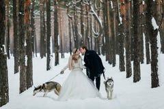 Les jeunes mariés marchent sur la traînée neigeuse avec le chien de traîneau deux sibérien Vue arrière dessin-modèle Image stock