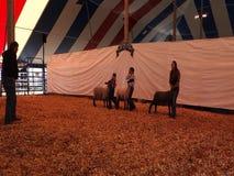 Les jeunes montrant leurs animaux de ferme à une foire régionale banque de vidéos