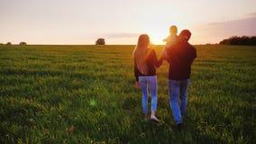 Les jeunes parents heureux marchent le long du champ, le père porte le fils de bébé dans des ses bras Rencontrer ensemble banque de vidéos