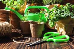 Les jeunes plantes dans les pots de tourbe avec des gants Images stock