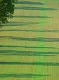 Les jeunes plantes forment le champ rayé régulier avec des ombres d'arbre Images stock
