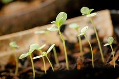 Les jeunes plantes se développent Images libres de droits