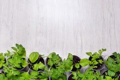 Les jeunes plantes végétales vertes éclairent dessus le fond avec l'endroit f Photo stock