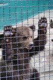 Les jeunes portent dans un zoo Image libre de droits