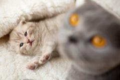 Les jeux de chat avec son chaton Photos stock