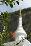 Les ketmies fleurissent sur le fond d'un stupa blanc Bouddha Photographie stock