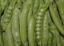 les légumes cultivent les pois végétaux organiques sains crus végétariens de cosse de pois de nourriture verte de poivre de plan  Image stock