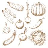 Les légumes frais ont isolé des croquis réglés Photo stock
