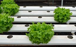 Les légumes verts à la culture hydroponique cultivent, nouveau système développé images libres de droits