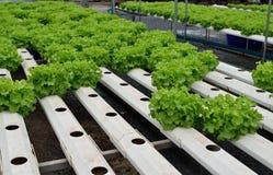 Les légumes verts à la culture hydroponique cultivent, nouveau système développé photo stock