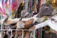 Les lamas ont séché le marché de sorcières de têtes de foetus, La Paz Bolivia Images libres de droits
