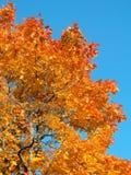 Les lames d'automne images stock