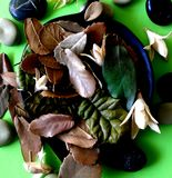 Les lames d'automne image stock