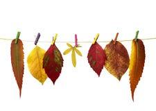 Les lames d'automne Photographie stock libre de droits