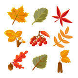 les lames d'automne ont placé Photos stock