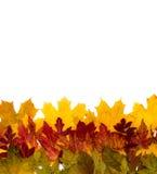 Les lames d'automne sont différentes Image stock