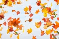 Les lames d'automne tombent Photo libre de droits