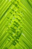 Les lames de cycad de feuillage Photographie stock
