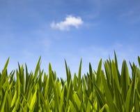 Les lames de vert Photographie stock libre de droits