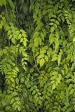Les lames donnent une consistance rugueuse (le vert) Image libre de droits