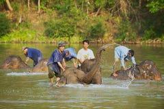 Les Laotiens baignent des éléphants en rivière au lever de soleil dans Luang Prabang, Laos Photos stock