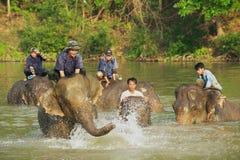 Les Laotiens baignent des éléphants en rivière au lever de soleil dans Luang Prabang, Laos Images libres de droits