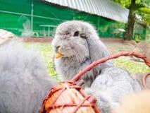 Les lapins photographie stock libre de droits