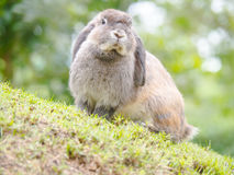 Les lapins photo stock