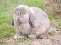 Les lapins photos libres de droits