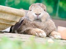 Les lapins image stock