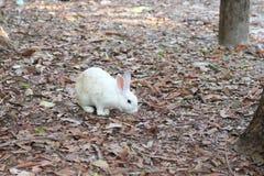 Les lapins blancs sont dans le sauvage Photographie stock libre de droits