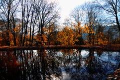 Les larges arbres color?s de feuille ont r?fl?chi sur la surface de l'eau ? l'automne/? lumi?re du jour de chute photographie stock