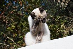 Les lavages sans abri de chat sur la barrière photo libre de droits