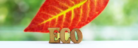 Les lettres en bois d'eco d'inscription l'automne poussent des feuilles Images stock