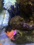 Les lièvres de mer image stock
