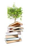 les livres de fond ont isolé le blanc d'arbre Photo libre de droits