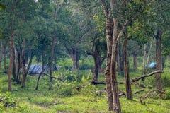 Les logements tribals dans l'éléphant de Dubare campent, Inde de Coorg Images libres de droits