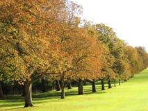 Les longs arbres de promenade Images stock