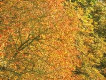 Les longs arbres de promenade Photographie stock