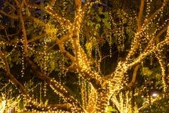 Les lumières extérieures décoratives brouillées de ficelle accrochant sur l'arbre dans le jardin aux festivals de nuit assaisonne photo stock